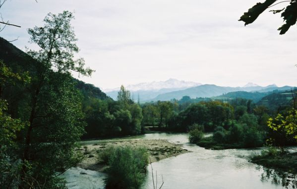 arbustos-hoja-estrecha-Sauceda-Buelles
